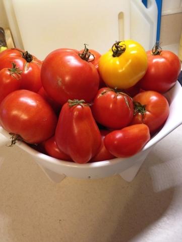 last_tomatoes