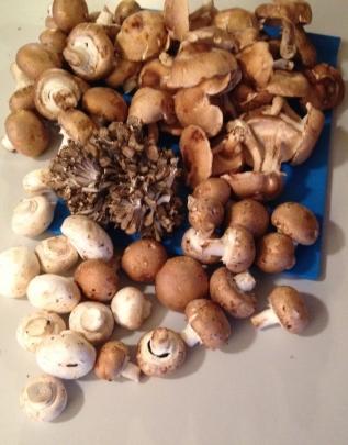 Four mushroom varieties