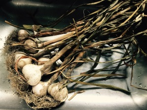 Cured garlic