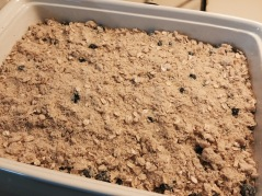 Half of streusel on top